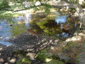 水あび鹿 300