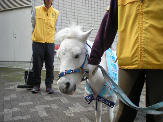 京都競馬場6