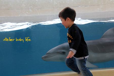 イルカと追っかけっこ