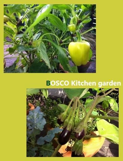 Boscoのコンテナガーデン