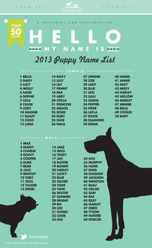fe082fc6-1353-4f0c-bceb-ebe57109b92b_2013-puppy-names-630_convert_20131206182916.jpg