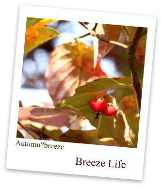 autumn breeze2
