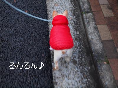 2012112901.jpg