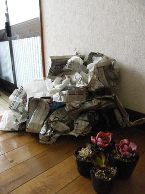 ゴミもたくさん