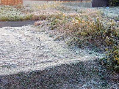 すんごい霜