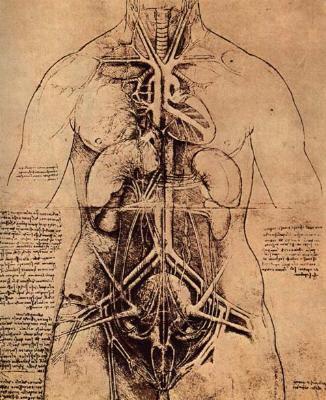 Leonardo-da-Vinci-Anatomie[1]