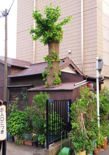 屋根に木100