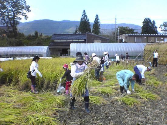 稲刈り18093001_convert_20110830153337