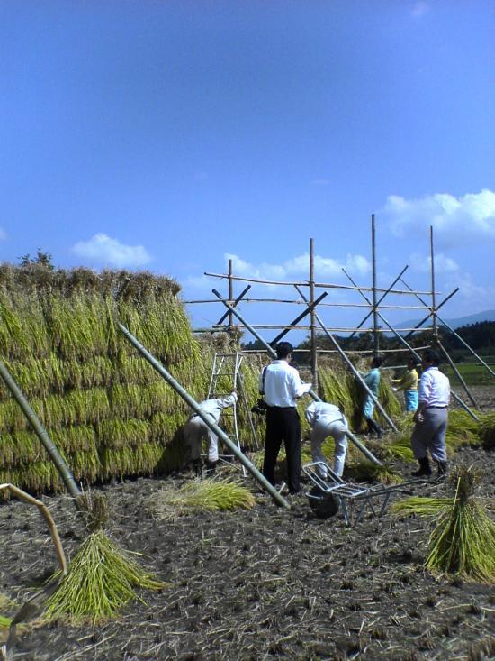 稲刈り18093002_convert_20110830153353