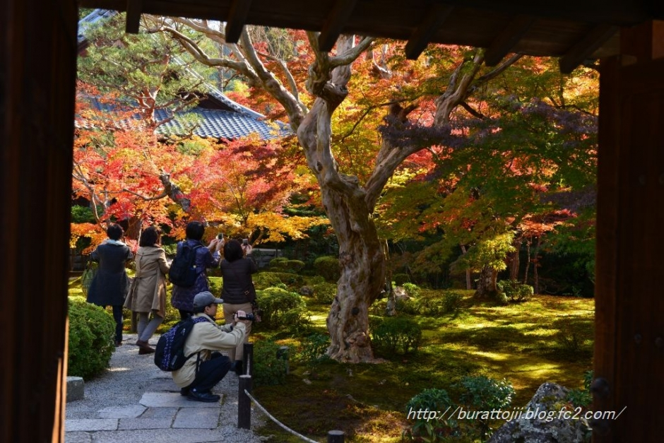 12.2013.11.21圓光寺十牛の庭