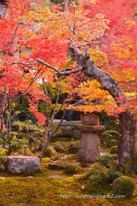 11.2013.11.21圓光寺十牛の庭