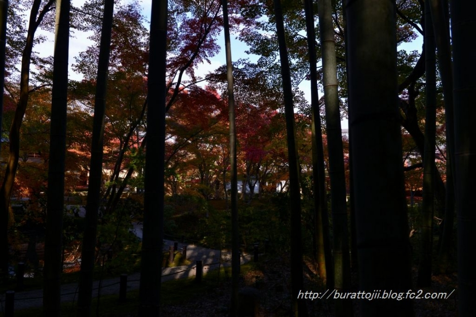 7.2013.11.21圓光寺十牛の庭