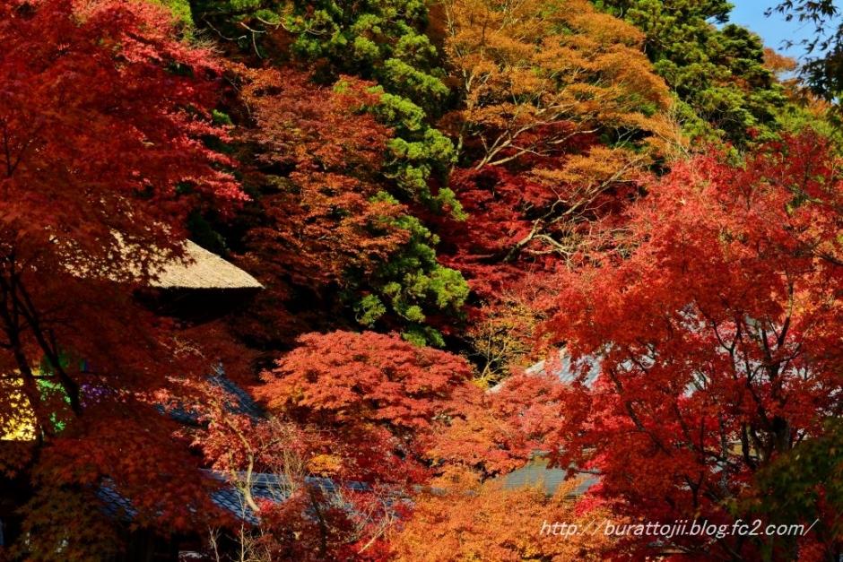 11.2013.11.22永源寺