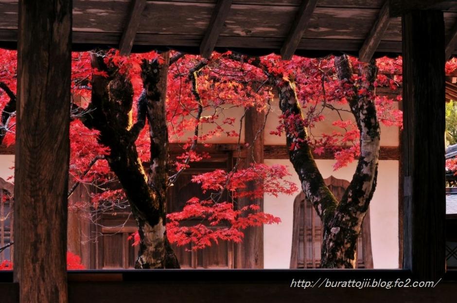 9.2013.11.22永源寺