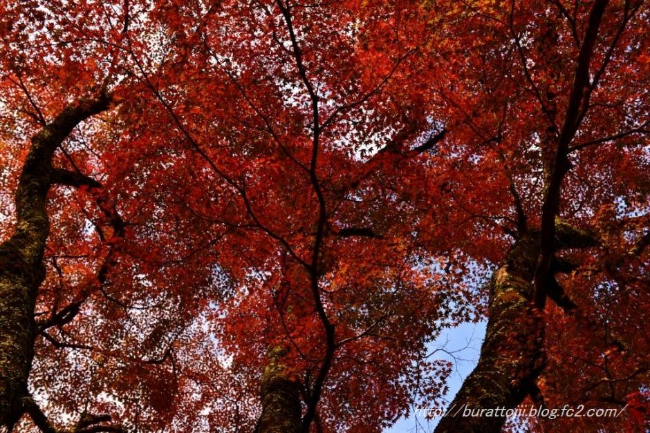 8.2013.11.22永源寺