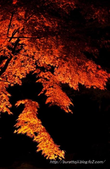 12.2013.11.22永源寺ライトアップ