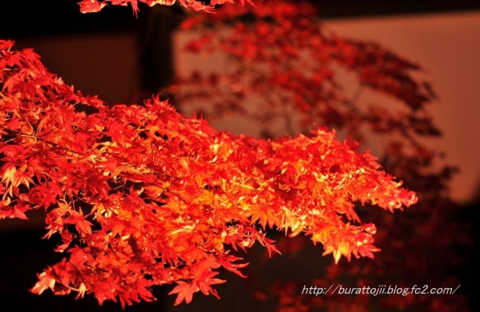 10.2013.11.22永源寺ライトアップ