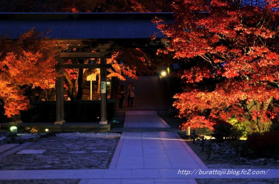 8.2013.11.22永源寺ライトアップ