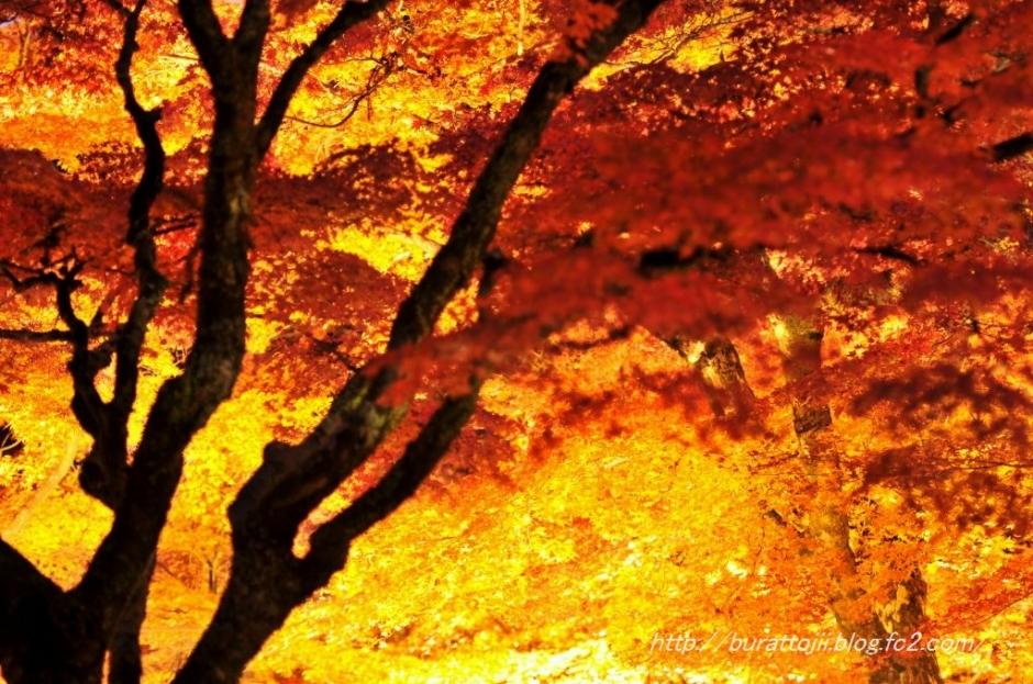 7.2013.11.22永源寺ライトアップ