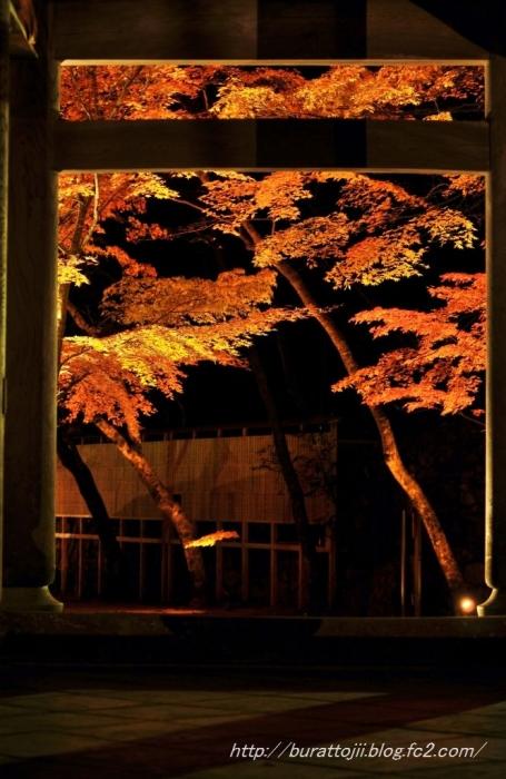 6.2013.11.22永源寺ライトアップ