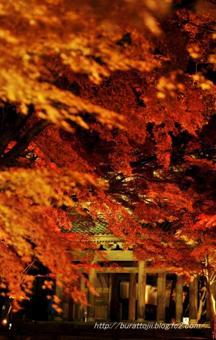 4.2013.11.22永源寺ライトアップ