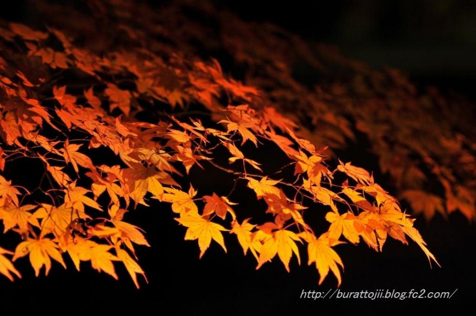2.2013.11.22永源寺ライトアップ