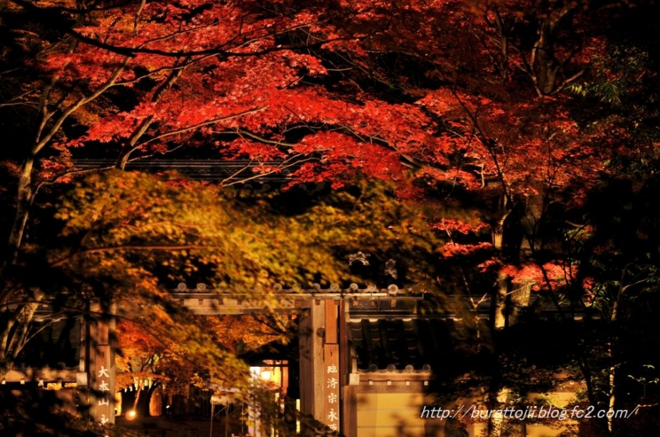 1.2013.11.22永源寺ライトアップ