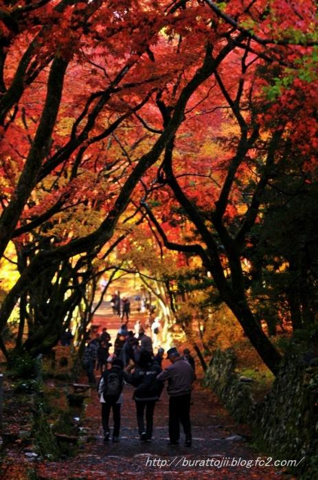 14.2013.11.23鶏足寺