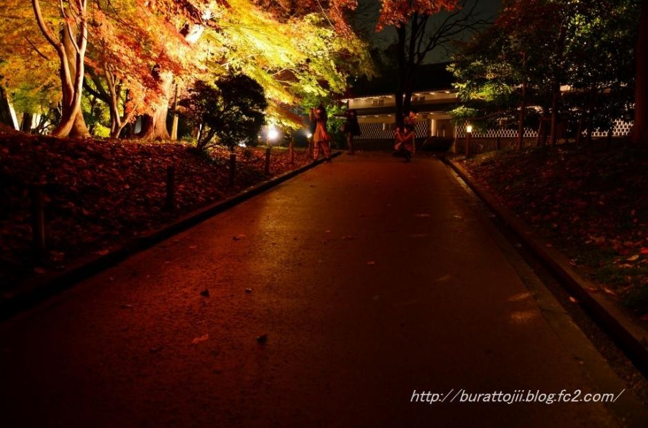 4.2013.11.24金沢城ライトアップ