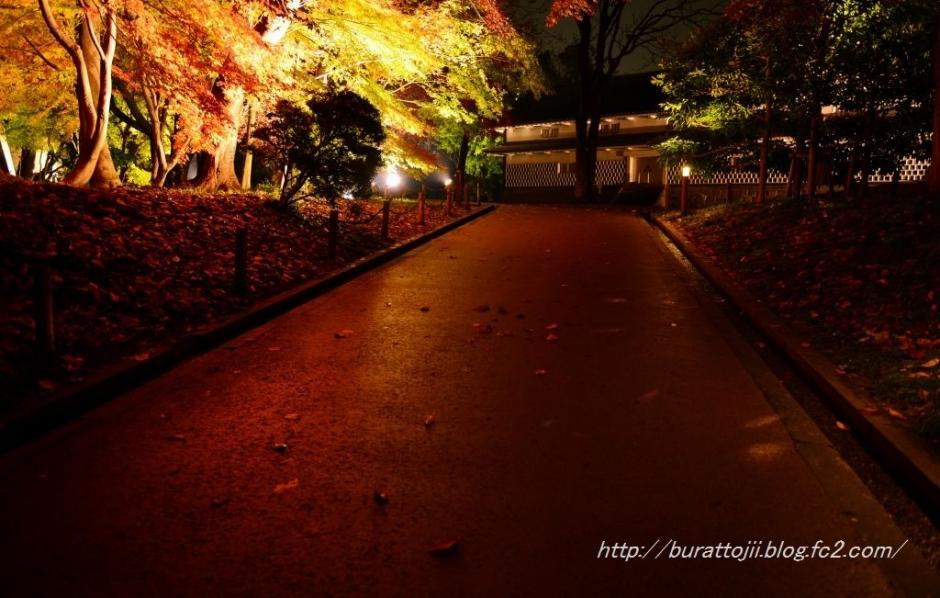 3.2013.11.24金沢城ライトアップ