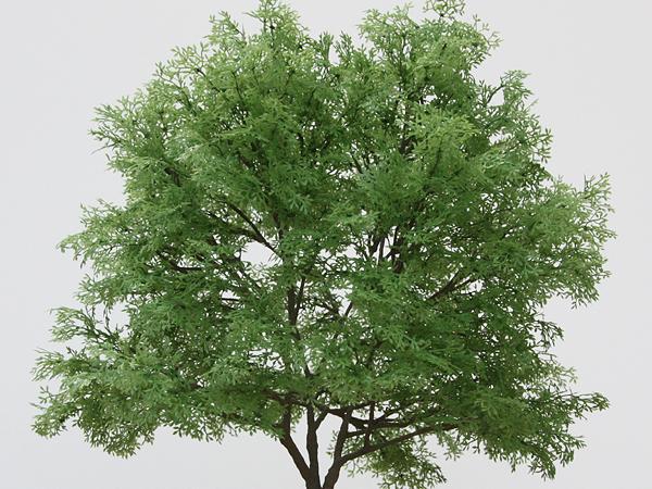 リアルツリーシリーズ・緑豊かな樹木(L)02