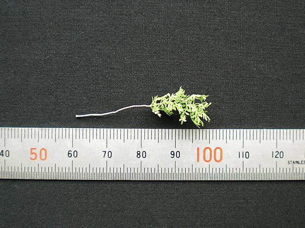 ジオラマアクセサリー用樹木製作パーツ【緑豊かな樹木】サイズ