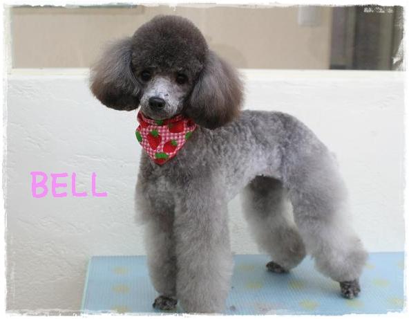 bell1_20120130144728.jpg