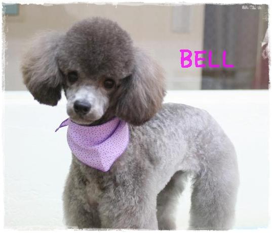 bell4.jpg