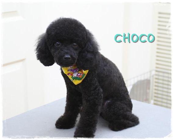 choco2.jpg