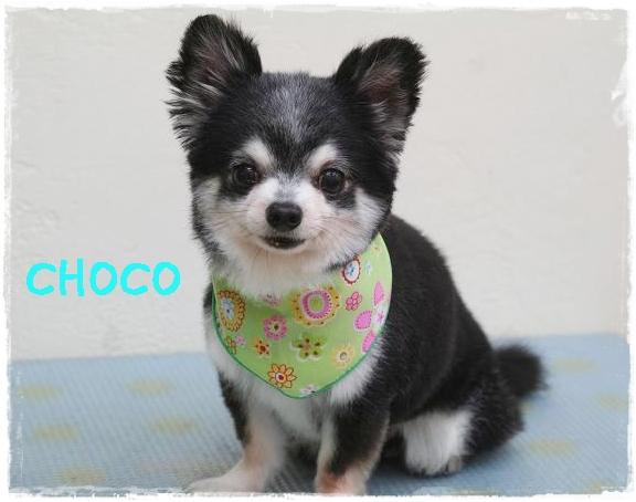 choco6_20120130144900.jpg