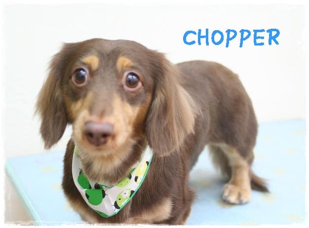 chopper5.jpg
