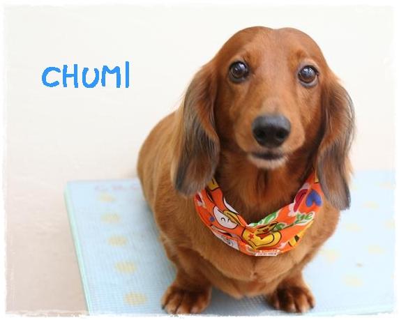 chumi1_20111221150736.jpg