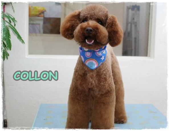 collon2.jpg