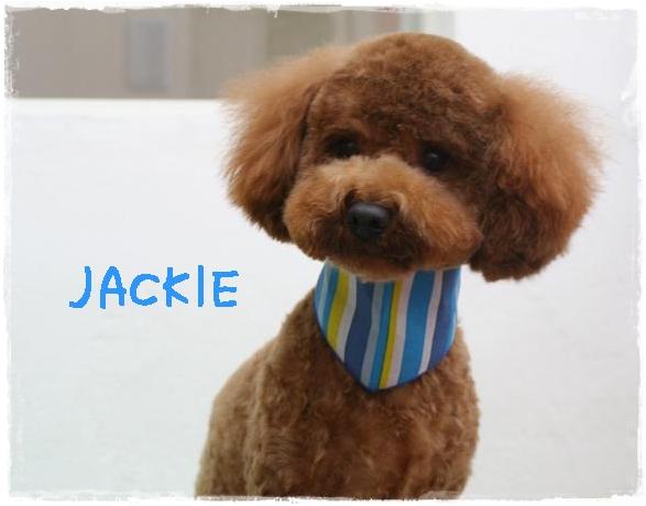jackie7.jpg
