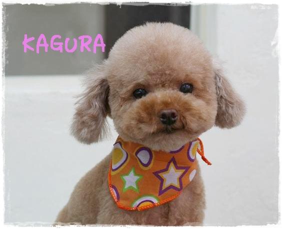 kagura1_20111121150001.jpg