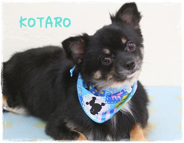 kotaro2_20111121150237.jpg