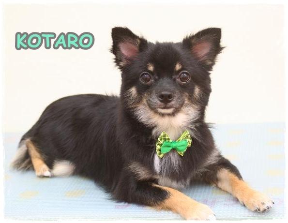 kotaro4.jpg