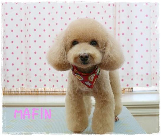 mafin8.jpg