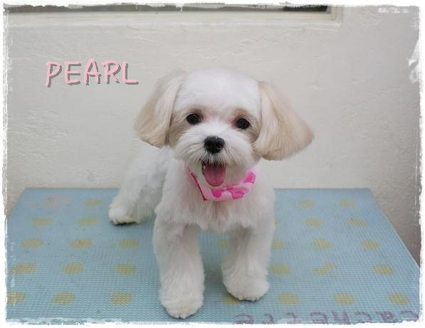 pearl7.jpg