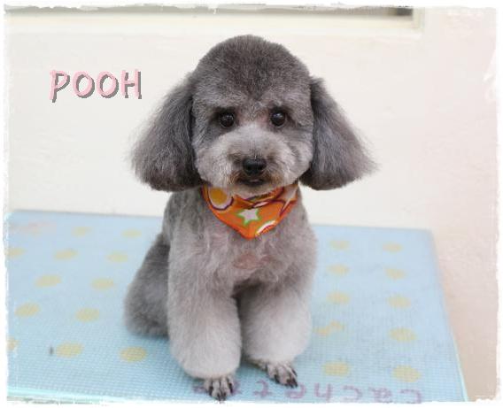 pooh5.jpg