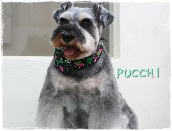 pucchi6.jpg