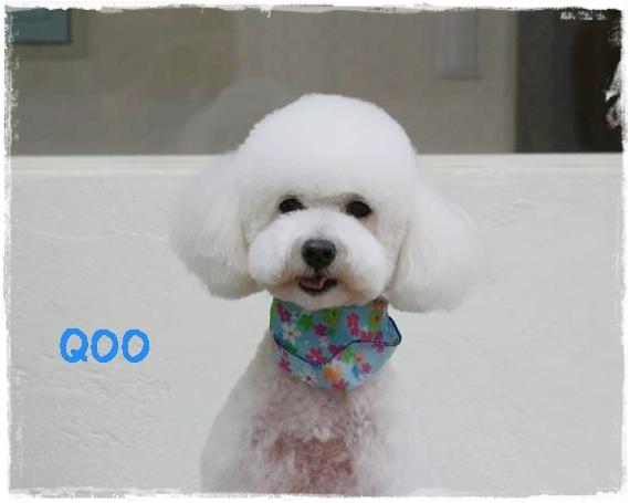 qoo1_20111221151043.jpg