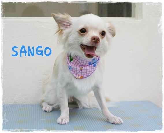 sango2.jpg