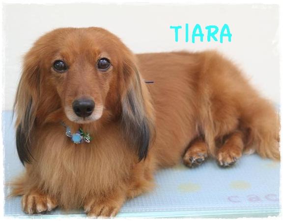 tiara4.jpg